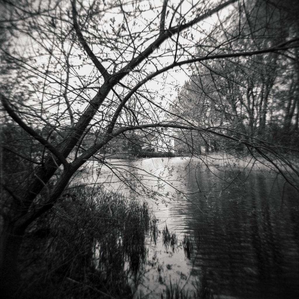 Cusworth Hall Lower Pond Study 2