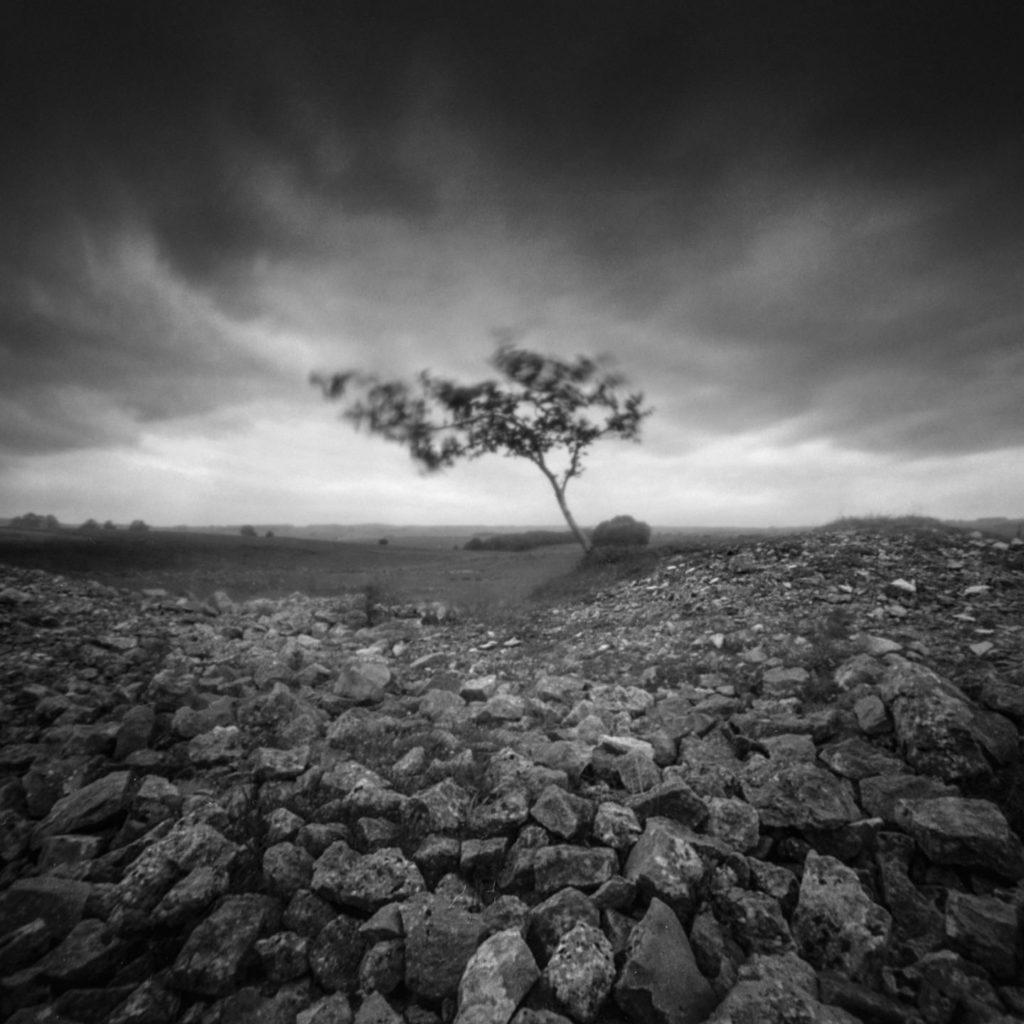 Tree In Rocks