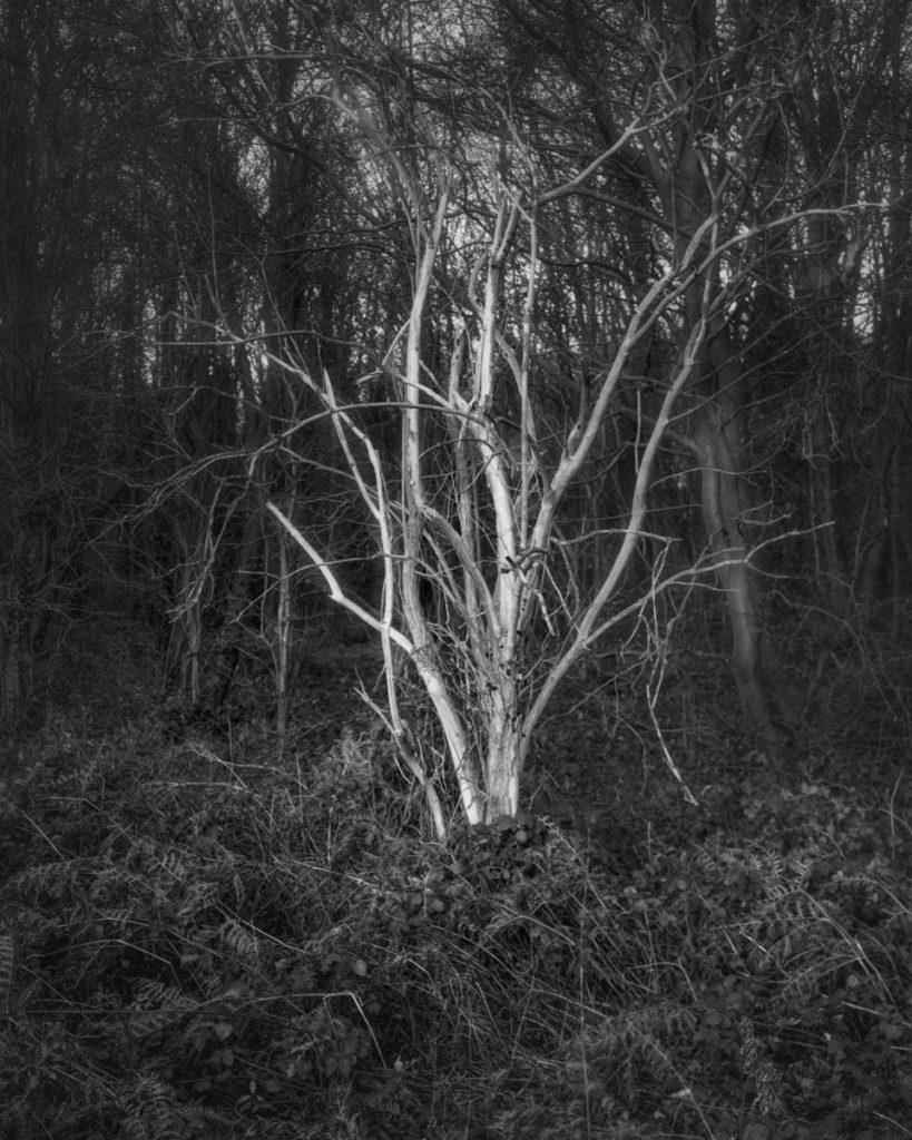 Stripped Tree